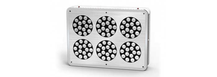LED ApolloSeries mixte (cro' & flo')